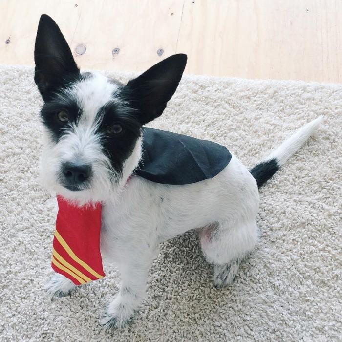 Ready for Hogwarts! dobbygram